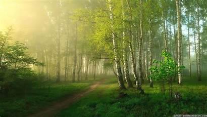 Nature Forest Wallpapers Spring Desktop 1366 768