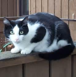 black cat white cat file black white cat on fence jpg