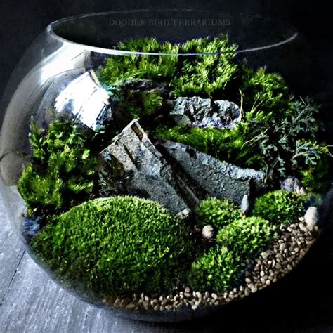 where to buy moss for terrariums 17 best images about moss gardens on pinterest gardens miniature and planters