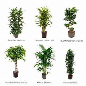 Online Pflanzen Kaufen : b ropflanzen hydrokultur zimmerpflanzen gr npflanzen kaufen ~ Watch28wear.com Haus und Dekorationen