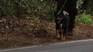 Missing Woodside hiker found alive with her dog after two ...