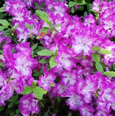 fiori australiani naturopata torino manassero naturopatia per te