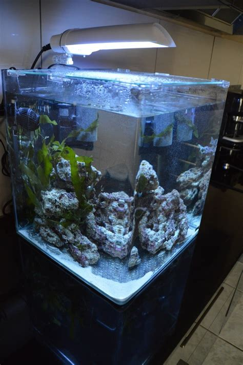 combien de poisson dans un aquarium recifal que mettre dans un nano de 60 litres les poissons