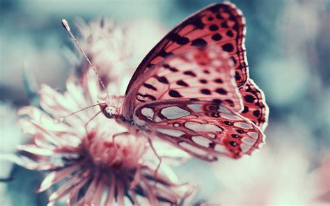 moths insect macro butterfly wallpapers hd desktop