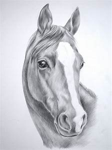 Realistic Horse Face Sketches Images For > Wild Horse ...