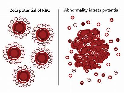 Blood Potential Cell Zeta Oxygen Cells Working