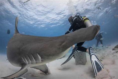 bimini scuba diving conditions  forecast march