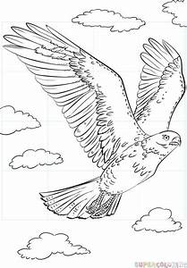 How To Draw A Hawk Flying Step By Step Drawing Tutorials