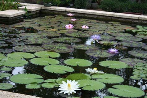 hill country water gardens