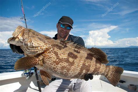 grouper fish giant sablin depositphotos