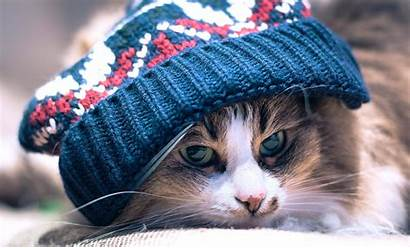 Cat Winter Hat Cool Cats Wearing Beanie