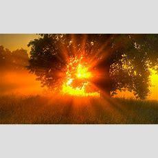 Scientiaro  De Ce Ziua Soarele Este Galben şi Cerul