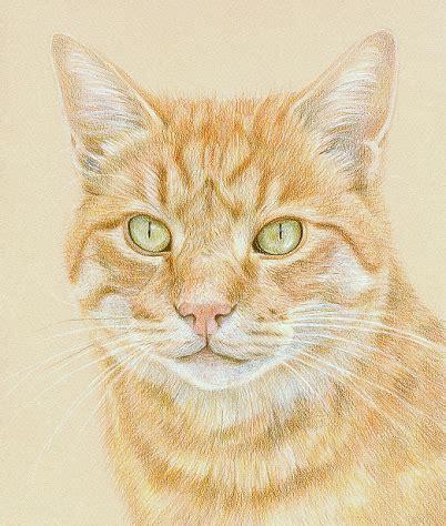 Pet Portraits  Coloured Pencil