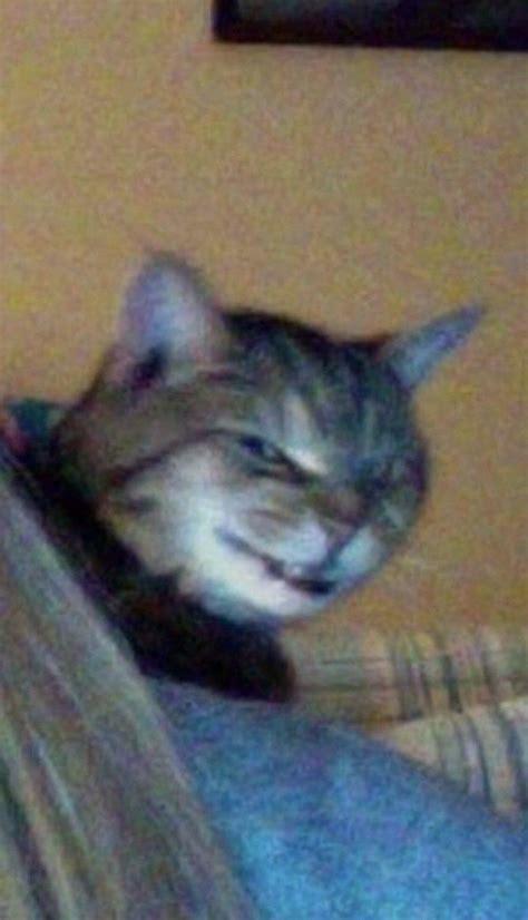29 Funny Cat Pfp Meme Woolseygirls Meme