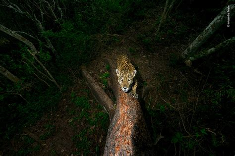 wildlife photographers   year  proving