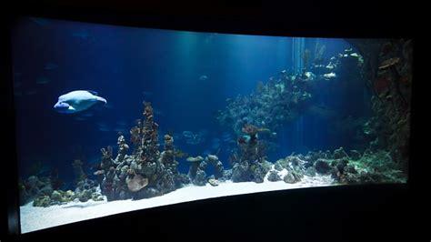 aquarium sauber machen anleitung aquarium richtig reinigen sauber machen the intelligence