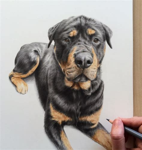 incredible animal pencil drawings  british artist