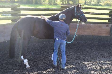 horse want jason don answer refuse buck nap rear simple webb