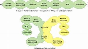 Biosynthesis Of Fatty Acids  U0026 Eicosanoids