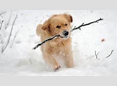 Tiere im Winter Dem Winter trotzen Wissen Themen BRde