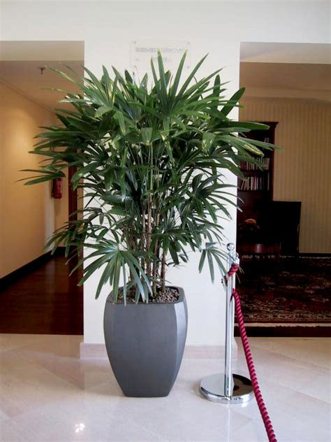 piante ufficio vendita e noleggio piante per interni roma e per uffici