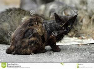 Homeless Cats Royalty Free Stock Photo - Image: 5341425