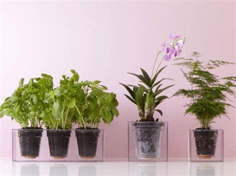 plante cuisine decoration quelle plante dépolluante est faite pour vous test