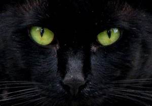 Green Cat Eyes Drawing