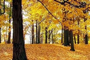 Kostenlose Bilder Herbst : 30 sch ne herbst wallpaper f r den desktop bild 2 ~ Yasmunasinghe.com Haus und Dekorationen