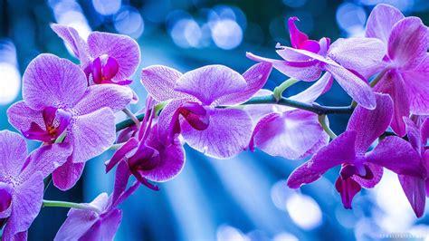 bureau monaco orchidée fond d 39 écran hd