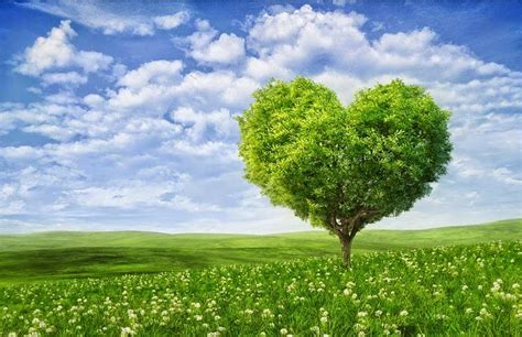 Wallpaper Free Tree Images by Lovable Images Nature Hearts Wallpapers Free