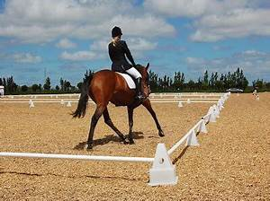 Dressage arena surfaces Auckland, Buying wood chips North ...