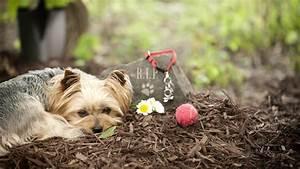 Katze Im Garten Begraben : haustiere bestatten das ist erlaubt ~ Lizthompson.info Haus und Dekorationen