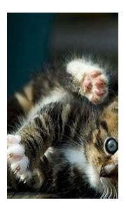 3D Cat Wallpaper - WallpaperSafari