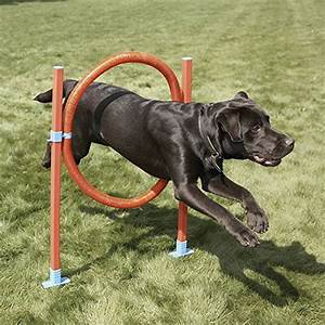 top 15 best dog agility equipment kits in 2017 beginners With best dog agility equipment