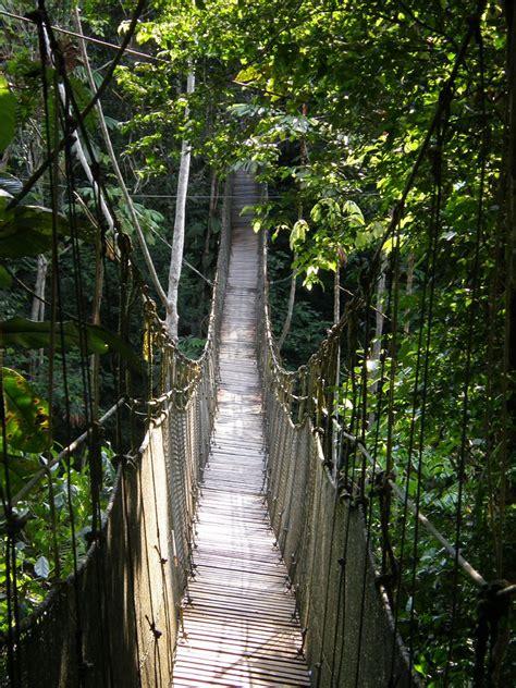 canopy walk amazon rainforest peru    series  flickr