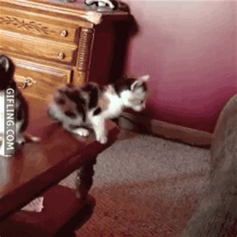 Awesome And Funny Jumping Cats