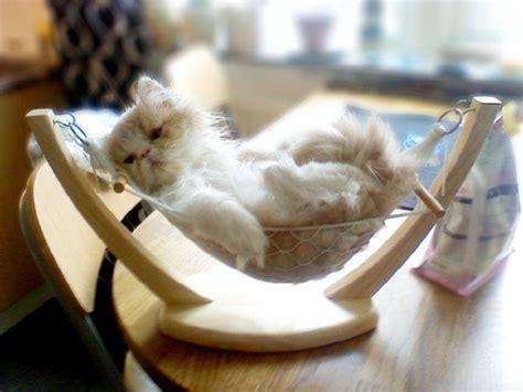 Kitten In A Hammock by Hammock