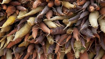 Vegetables Root Examples Reference Crop Sweet