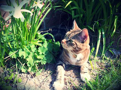 outdoor cat lyla cat whitburn whiskers cat sitting