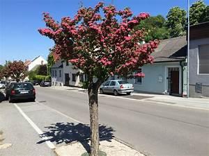 Rosa Blühende Bäume April : bild 1 aus beitrag bl hende b ume in der nibelungengasse ~ Michelbontemps.com Haus und Dekorationen