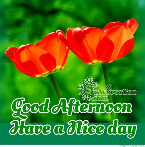 good afternoon flower pictures  graphics smitcreationcom