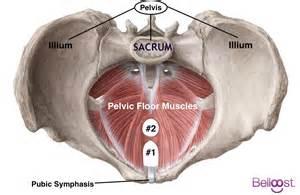 belloost pre natal pelvic floor stretch