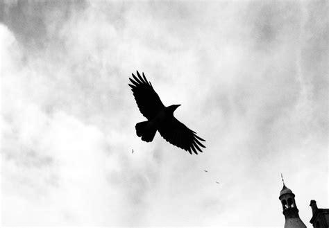 Bird Crow Dark · Free Photo On Pixabay