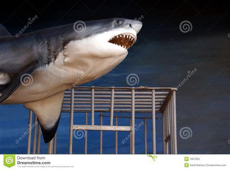 bocca di gabbia squalo bianco di greak e gabbia di tuffo immagine stock