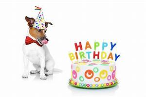 Dog party planning: Throwing a birthday bash for Fido and ...
