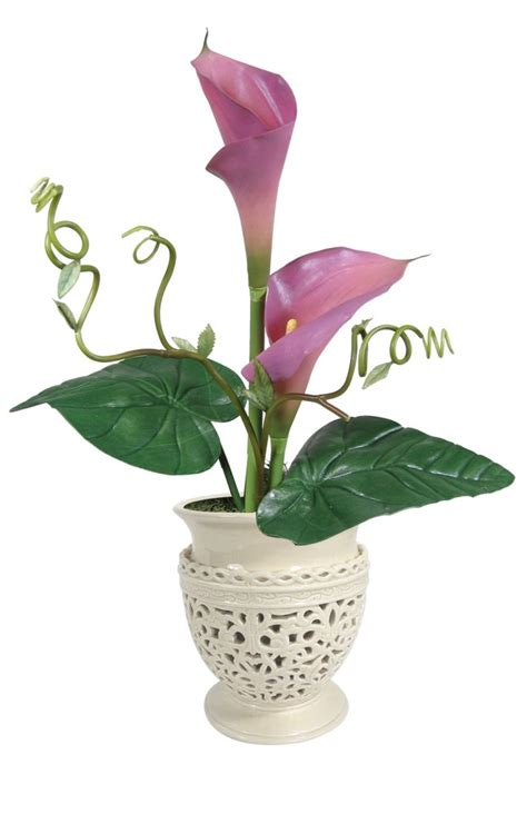 pink calla plant pink calla lily plant image search results