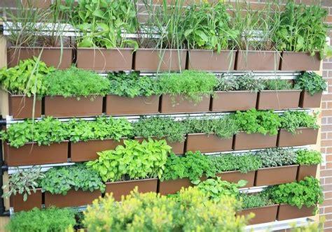 vertical herb garden green walls vertical herb gardens