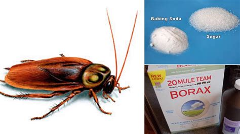how to get rid of cockroaches in kitchen cabinets how to get rid of cockroaches in house naturally and