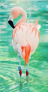 315 best images about Flamingo Fever on Pinterest ...